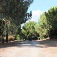 Andalusian Cortijo style villa in country living Casares_private groinds_Realista Quality Properties Marbella